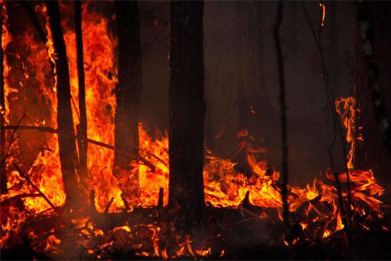 森林大火手绘图片展示